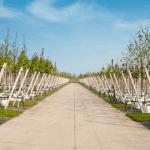 Betonpaden in pottenveld | De Keij Betonplaten & Keerwanden