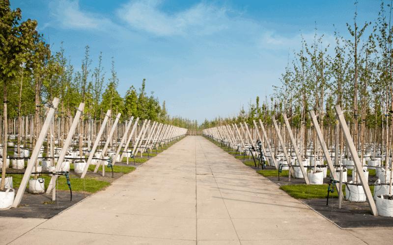 Betonplaten | Betonpad bij kwekerijen | De Keij