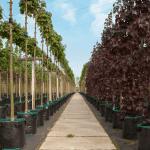 Betonplaten 200x100cm | Betonpaden pottenveld | De Keij