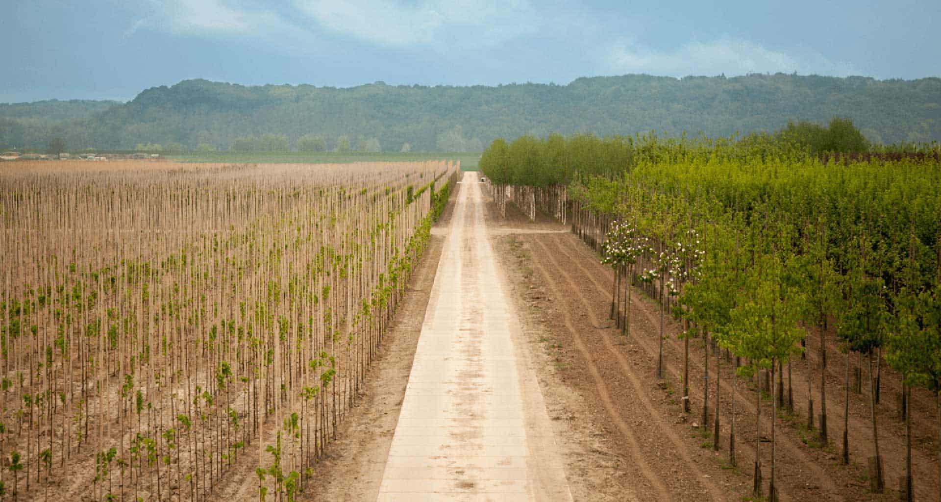 Project Kesteren   Betonpaden boomkwekerij   De Keij