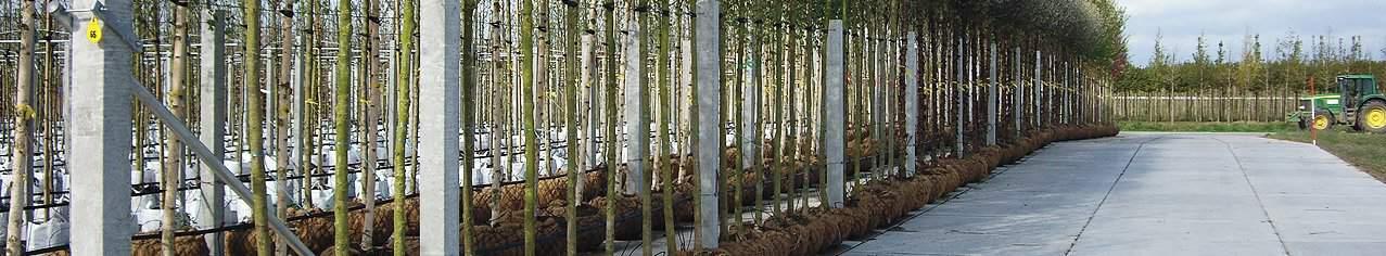 Betonpaden kwekerijen   De Keij