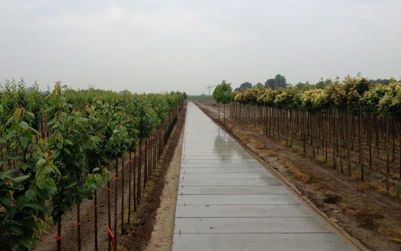 Kavelpaden boomkwekerij | Betonplaten 300x120x.14cm | Project Kesteren | De Keij